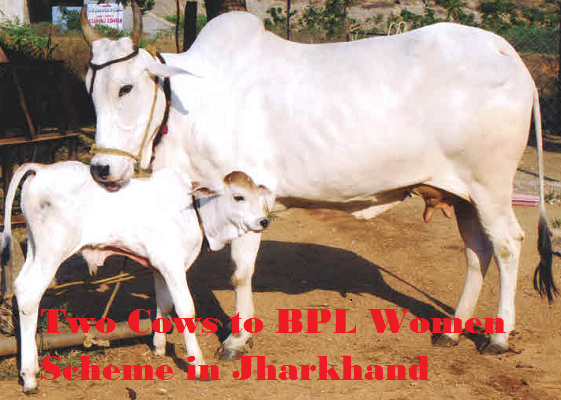 Two Cows to BPL Women Scheme in Jharkhand
