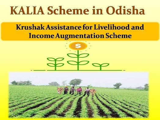 kalia scheme odisha new list